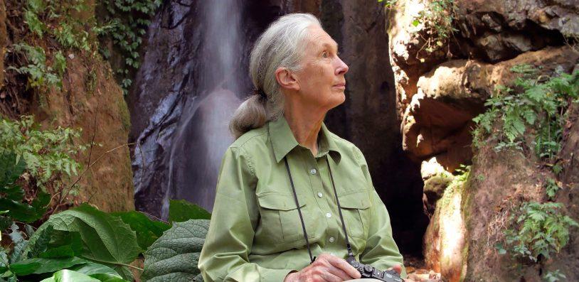 Photo © the Jane Goodall Institute - Bill Wallauer
